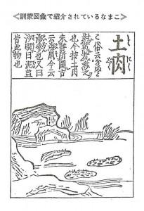 土肉(トニク)