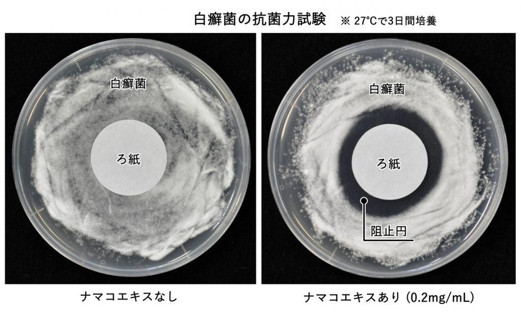 ナマコエキス 抗菌力試験